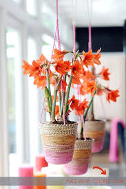 this summer decorate your home with plants and flowers