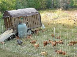 photos of poultry pen with backyard chicken pen plans holds 3