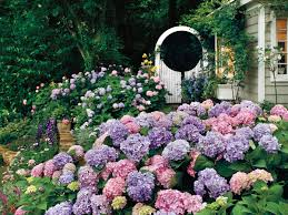 go ahead plant those gardenias southern living