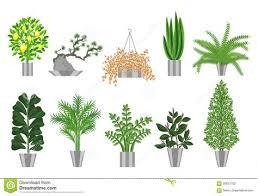 biggest house plants collection of biggest house plants emejing big indoor plants