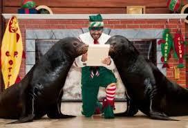 seaworld u0027s christmas celebration sandiego com