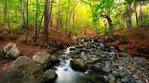 research points to importance of tree cover for stream life u2013 the