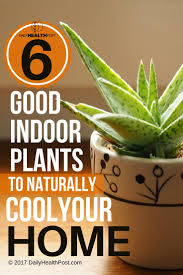 6 good indoor plants that will help keep your house naturally cool