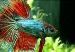 arowana aquarium service provider of ornamental fish aquarium