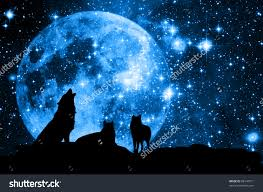 image stock photo wolves pack in silhouette against a blue