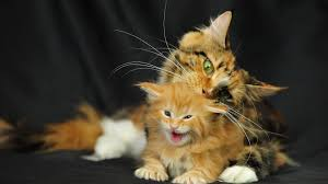 beautiful kittens mom cats and their beautiful kittens 10 adorable photos