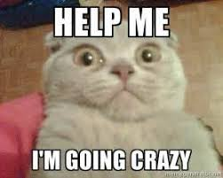 help me i m going crazy geezus cat meme generator cats going to