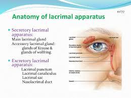 Eye Ducts Anatomy Suraj Lacrimal Appartus Ppt 2
