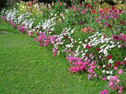 cottage garden flowers uk erodriguezdesign com