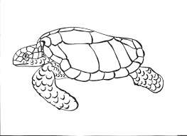 free printable turtle coloring pages for kids in draw a