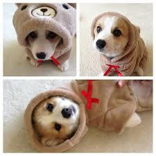 Cutest Memes - the cutest animal memes ever
