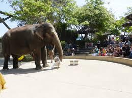 Six Flags Birthday 31 Elephant 1