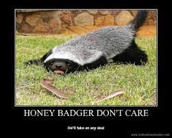 Honeybadger Meme - randall the honey badger animal narrator meme stemjar online