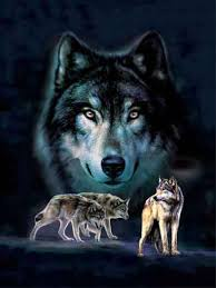 free sle wolf and moon lenticular 3d picture plastic
