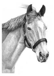 pencil pet portraits from photos drawings of cats dogs u0026 horses