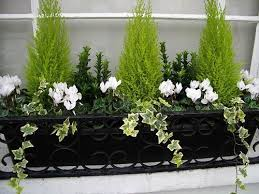 25 unique winter garden ideas on pinterest grow meaning winter