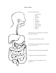 digestive system coloring page glum me