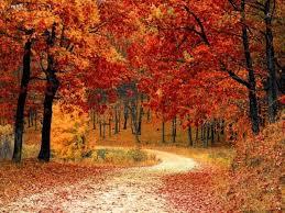 fall foliage 2017 leaves change maryland