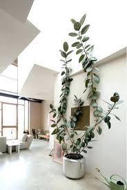low light indoor plants best low light indoor plants sensible gardening and living low light