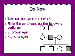 Color Blindness Pedigree Worksheet Do Now 1 Certain Acquired Characteristics Such As Mechanical Or