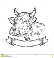 cow head fresh beef organic meat hand drawn sketch in a graphic