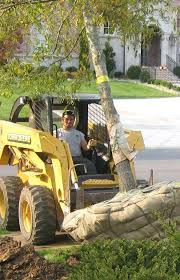 5 tree care services to enhance your new install