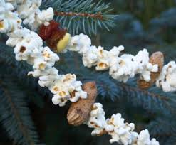 peanut christmas tree don t trash that christmas tree the humane society of the united