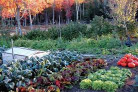 top tips for great fall gardens organic gardening mother earth