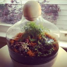 sf bay area etsy street team tuestorial terrariums