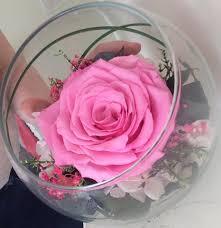 endura roses enduraroses twitter