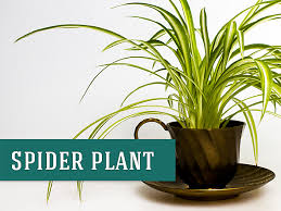 8 Houseplants That Can Survive by 26 Best Indoor Plants For Your Home