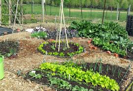 grow it eat it 100 square foot garden derwood 2015