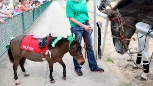 top st patrick u0027s day horse names america u0027s best racing