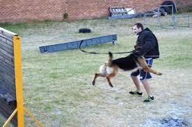 belgian sheepdog diet german shepherd dog