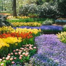 a stunning range of flower bulbs from suttons suttons seeds and