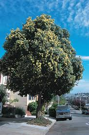 mutant in bloom u2014 san francisco trees