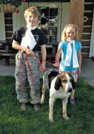 bluetick coonhound mississippi coonhound u0026 foxhound companions long ears blog