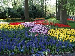 keukenhof a paradise for flower bulbs fans u2014 gardeny goodness