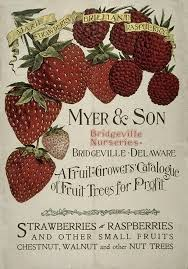 281 best seed art images on pinterest vintage seed packets