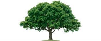 tree service fairfax va arlington va