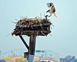 New Jersey wildlife tours images Njdep division of fish wildlife raptors in new jersey jpg