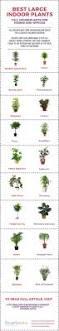 Interior Illusions Home 18 Best Large Indoor Plants For Home Large Indoor Plants