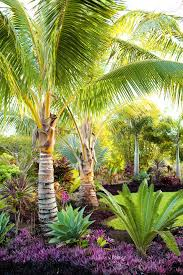 outdoor palm tree l palm tree decorating landscape tropical with patio furniture l