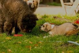 Tierheim Bad Salzuflen Hunde Home Sammy S Farm
