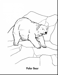 remarkable coloring pages of polar bear cartoon with polar bear