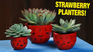 strawberry succulent planters youtube