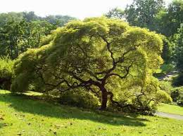 cool trees trees woody plant free images from science prof online