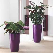 Office Pots by Articles With Design Flower Pots Tag Design Flower Pot Images