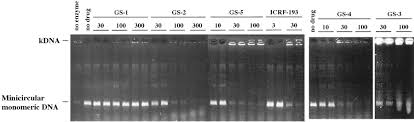 inhibition of dna topoisomerases ii and or i by pyrazolo 1 5 a