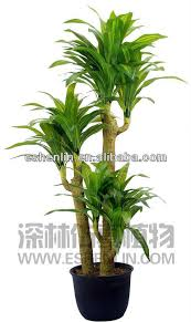 big leaves craft centerpiece plants agave blue exoterra